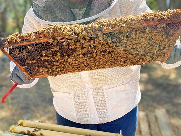 Beekeeper tending to beehive