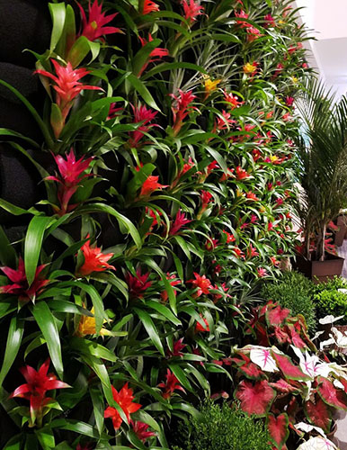 living wall with colorful plants