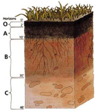 a simplified soil profile