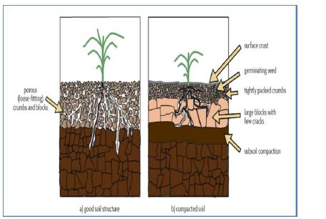 compacted soil has smaller pore spaces than noncompacted soil