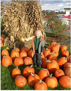 Kid near pumpkins