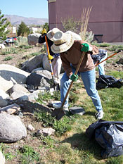 Photo of a person in a garden removing weeds with a shovel