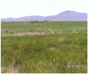 Flood-irrigated grass hay meadow in Paradise Valley
