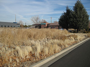 Photo of an empty lot covered with weeds