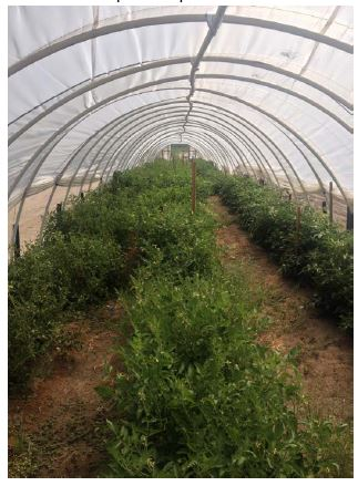 hoop house production