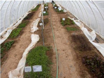 more hoop houses