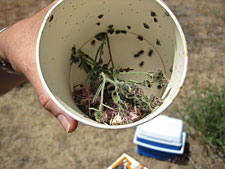 Photo of a cup with samples of weeds