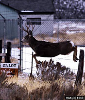 Photo of a deer jumping over a fence