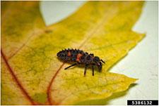 Photo os larvae on a leaf