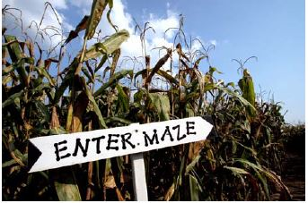 Enter maze sign in crops
