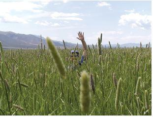 man in hay