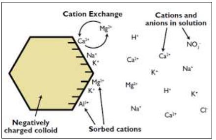 Exchange capacity