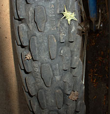 photo of a tire with a puncturevine seed attached to it