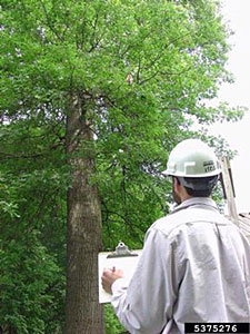 PHoto of an inspector with a clipboard examining a tree