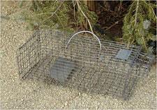 Photo of a metal animal trap