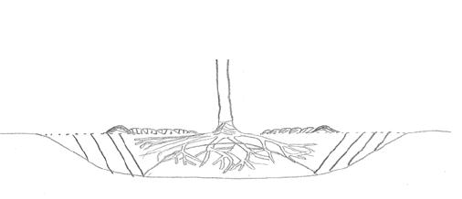 Mounded bareroot