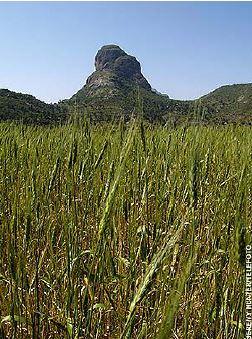 grass range