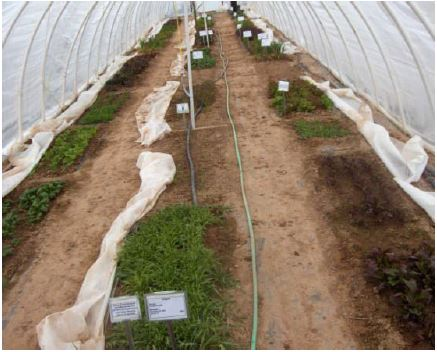 cold-tolerant crops