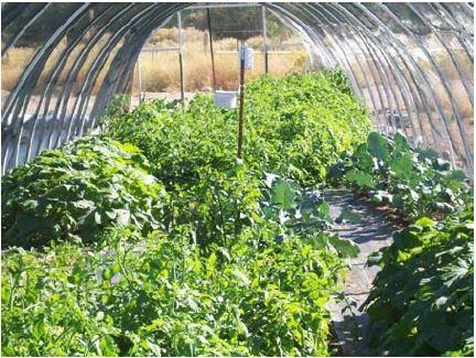 niche crops
