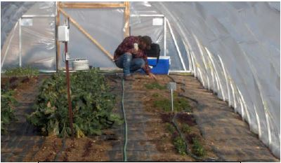 Winter production in hoop houses Lincoln County UNCE