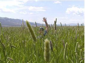 person in crops