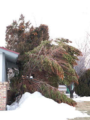 Photo of a tree growing too close to a house