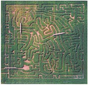 Aerial view of a corn maze