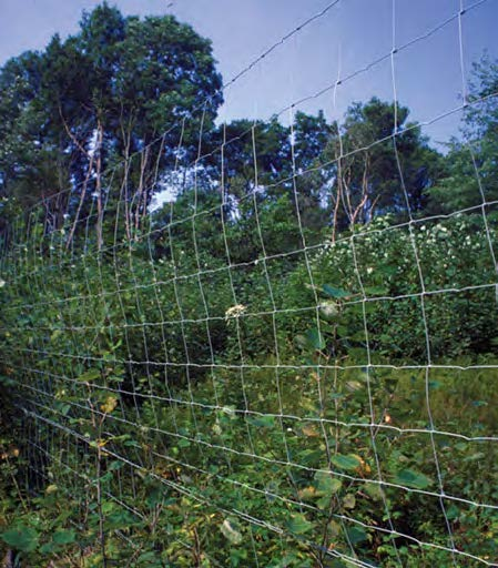 Wire fence with weeds on other side creating a physical barrier.