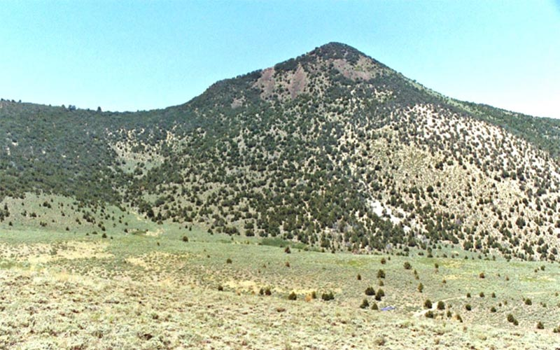 2007 photo with dense and larger pinyon and or juniper trees  taken by Robin Tausch in the Shoshone Range