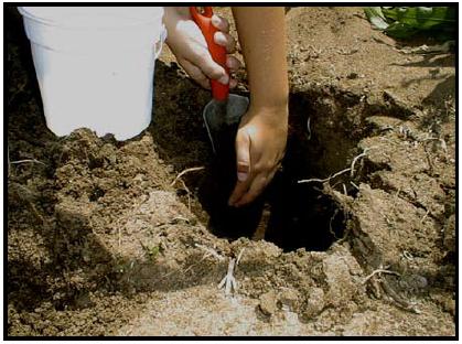 Hole being dug