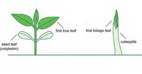 Seed Life Cycle