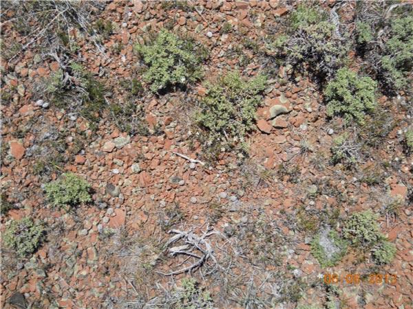 Image result for desert pavement sagebrush.