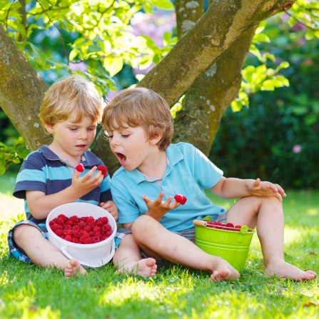 boys eating raspberries