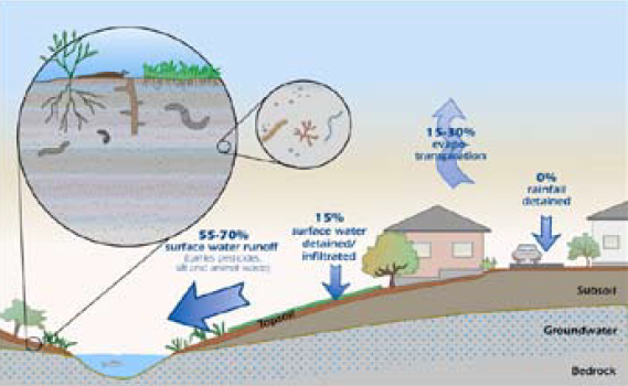 Stormwater distribution and depleted soil biota