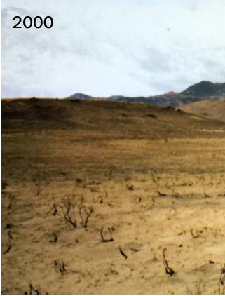Landscape in 2000