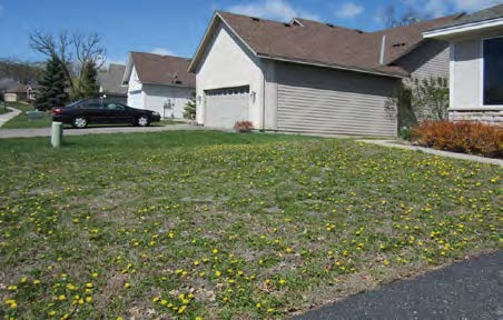 Front yard of home where the weeds have overtaken the grass with patches of dirt exposed.
