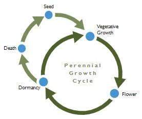 Diagram 3: Perennial Growth Cycle. Vegetative Growth -> Flower -> Dormancy -> Death -> Seed
