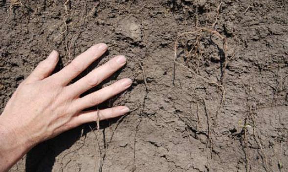 Hands on soil