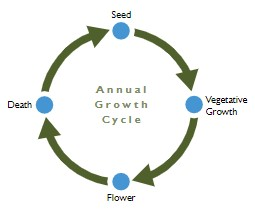 Diagram 1: Annual Growth Cycle