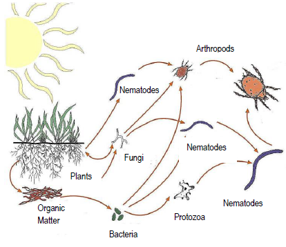 Living organisms in soil