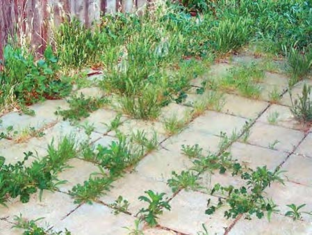 Paver patio with many weeds growing between the pavers?