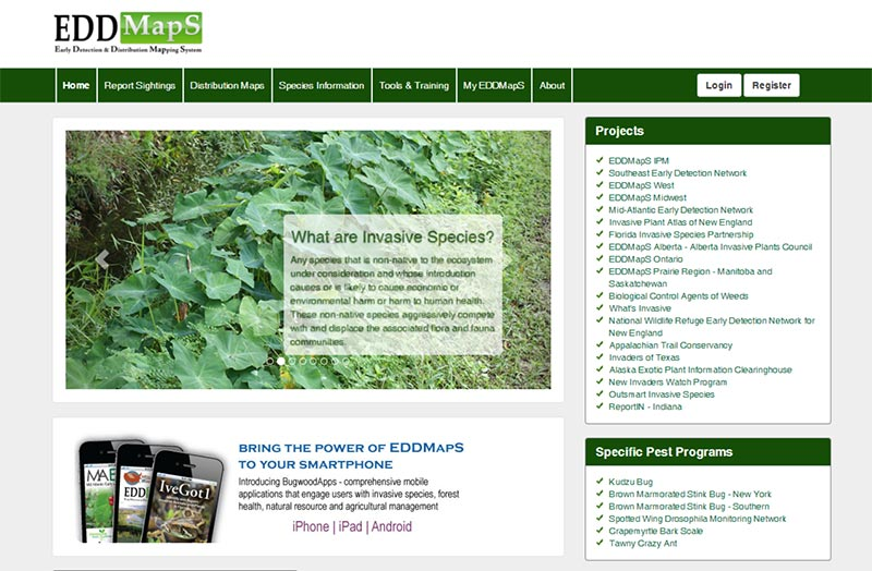 Screen shot of Eddmaps web site (https://www.eddmaps.org/ ).