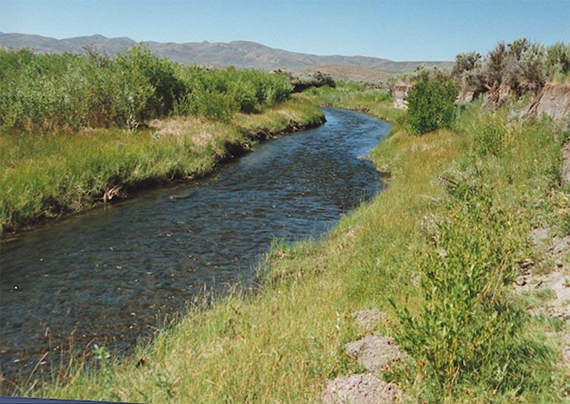 Much better stream condition that would result in cool summer water temperatures in Maggie Creek.