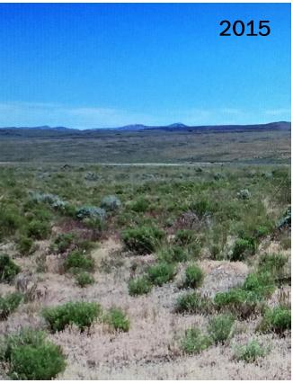 Landscape in 2015
