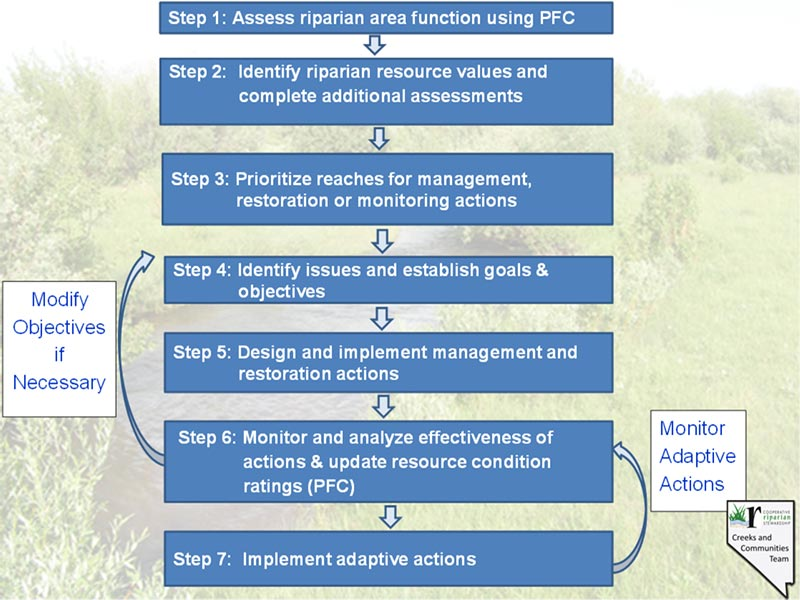 PowerPoint slide of the seven step process of Integrated Riparian Management1. Assessment of riparian area function using PFC2. Identify riparian resource values and complete additional assessments3. prioritize reaches for management restoration or monitoring actions4. Identify issues and establish goals and objectives5. Design and implement management and restoration actions6. monitor and analyze effectivenss of actionsand update condition ratings.7., Implement adaptive actions.