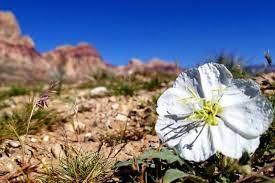 Flower blooming in the desert.