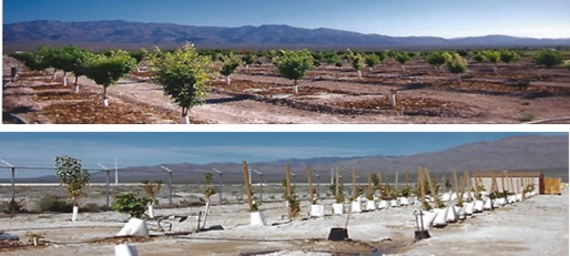 Pictures show young fruit trees and grape vines growing in 2003.