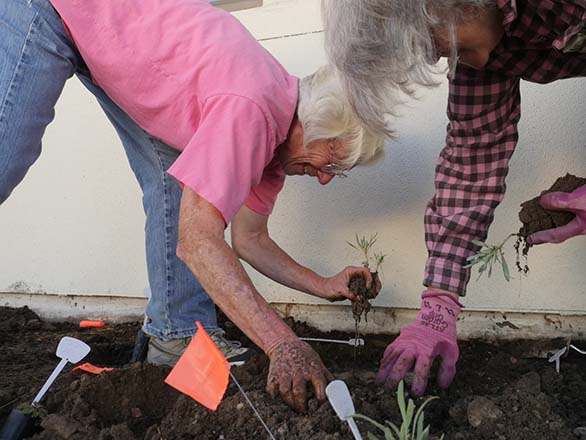 Master gardeners planting seedlings