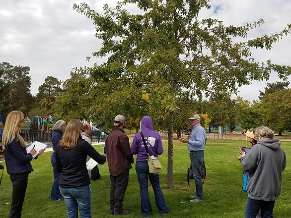 people learning to identify a tree
