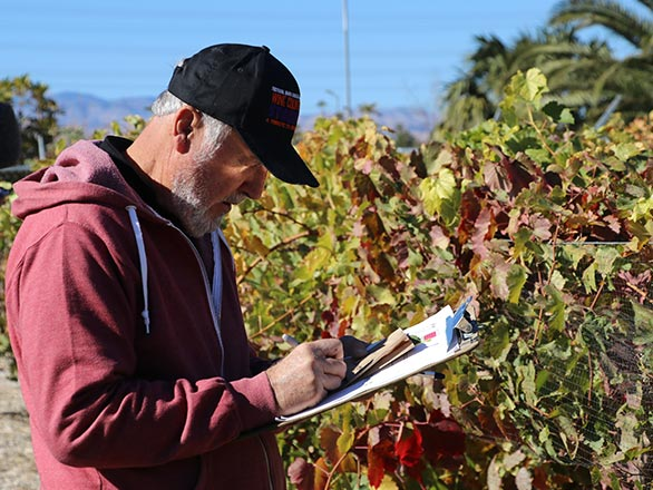Master Gardener taking grape inspection notes on a clipboard